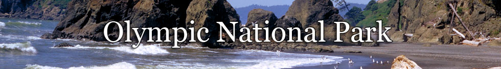 Olympic National Park NPS Photo